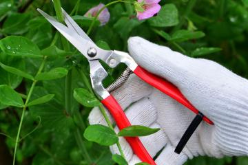 Đơn hàng Nhã Văn cần tuyển gấp lao động làm vườn, cắt tỉa hoa, cỏ.